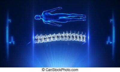 spina umana, blu, proiezione, in, cappio