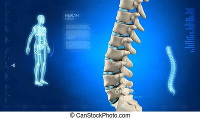 spina umana, in, dettaglio, con, vertebra