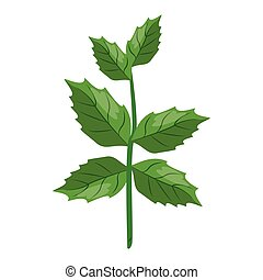 Spinach herbal leaves cartoon vector illustration graphic...