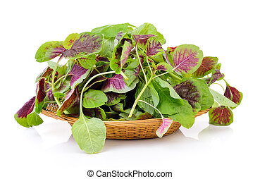 spinach in the basket on white background