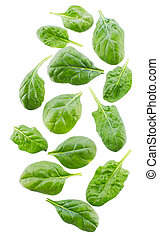 spinach leaves on white background