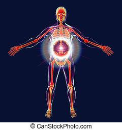 Spinal disease treatment concept