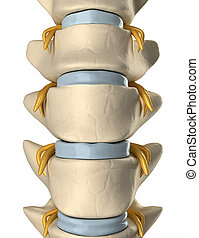 Spinal nerve on the backbone - anterior view