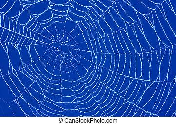 spindelväv, med, blänkande, daggdroppar