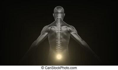 Spine auras on a man silhouette