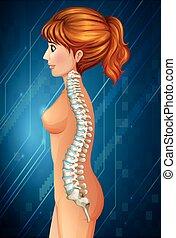 Spine diagram in detail