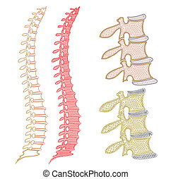 Spine Graphic - A geometric view of a human spine