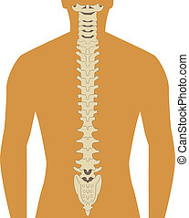 spine - human silhouette with spine illustration vector