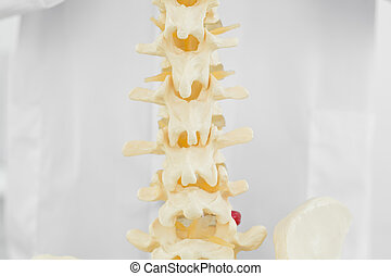 Spine isolated over white background - Close-up of a spine ...