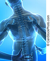 Spine pain concept