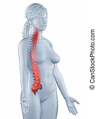Spine position anatomy woman isolated lateral view