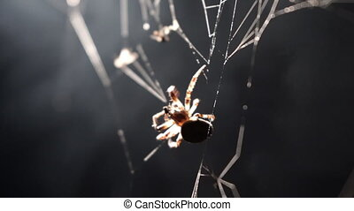 spinne, drehungen, a, web, in, makro