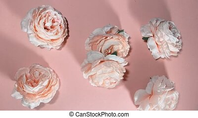 Spinning dancing peonies flowers. Stop motion animation.