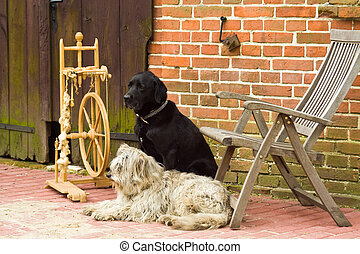 spinning wheel with two dogs