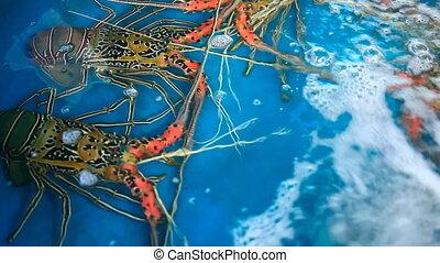 Spiny lobster. - Spiny lobster at the fish market. Phuket,...