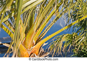 Spiny palm fronds  - Spines on palm fronds