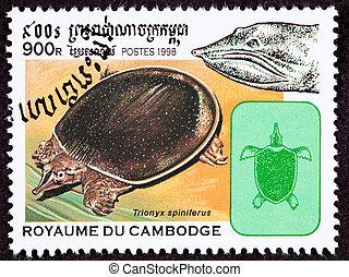 Spiny Softshell Turtle, Apalone spinifera, formerly Trionyx...