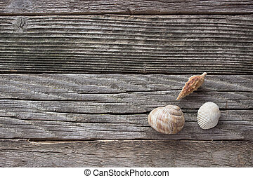 Spiral sea shell on wooden background