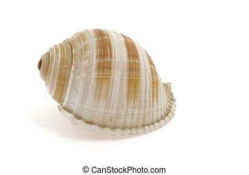 spirale, fond blanc, coquille, escargot