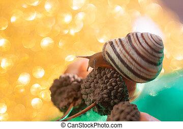 spirale, pomatia, auch, römisches , schnecke, burgunder schnecke, , air-breathing, land, schnecke, a, irdisch, pulmonate, gastropode, weichtier, in, der, familie, helicidae.