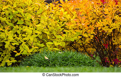 Spirea trimmed in the shape of a ball with yellow leaves in an autumn garden