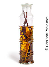 Bottle of alcohol with snake and ingredients isolated over white background
