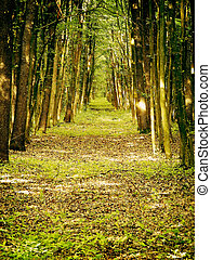 Spiritual forest path - Spiritual path in a beautiful fresh...