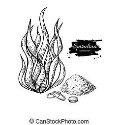 Spirulina seaweed powder hand drawn vector. Isolated...