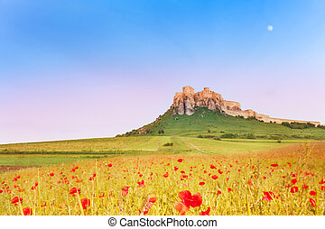 Spis Castle and poppy field - Spis Castle on the hill with ...