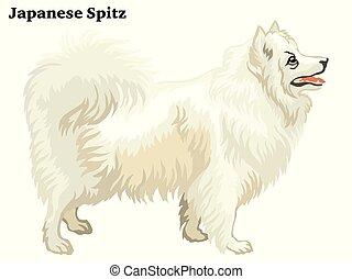 spitz, ベクトル, 装飾用である, 肖像画, 地位, 有色人種, 日本語, イラスト