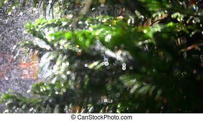 Splashes water on bokeh spellbinding background fir-tree. Shift in focus from near to far distances and back with professional lens