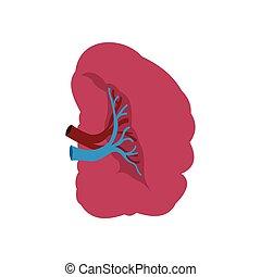 Spleen icon flat - Spleen icon in flat style isolated on...