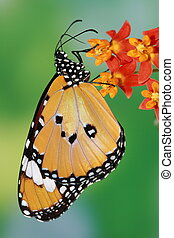 splendid and beautiful butterfly