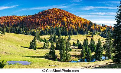 splendid autumn landscape on a bright day. spruce trees on...