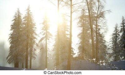 Splendid Christmas scene in the mountain forest. Colorful winter sunrise