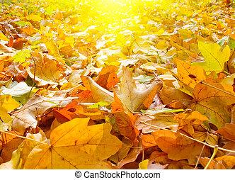 Splendid morning view of autumn leaves.