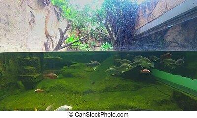 Split shooting, underwater life in the aquarium.