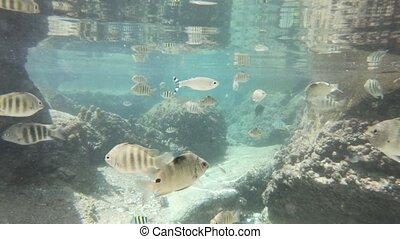 Split view sea of Caiman Natural Pool - Split view diving...