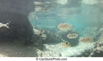 Split view under and above sea diving - Split view diving...