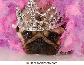 spoiled dog - adorable pug dressed up as a princess