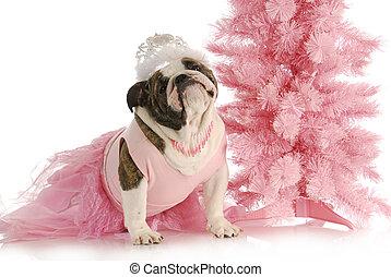spoiled dog - english bulldog dressed like a princess in...
