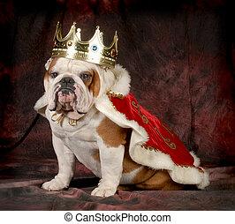 spoiled dog - english bulldog dressed up like a king - 4...
