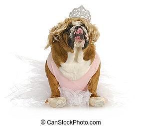 spoiled dog - english bulldog dressed up like a princess in...