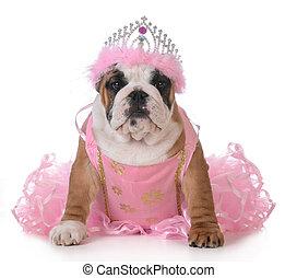 spoiled dog - english bulldog dressed up like a princess on...