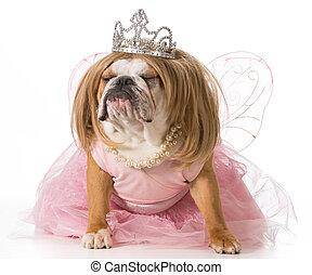 spoiled dog - english bulldog wearing princess costume