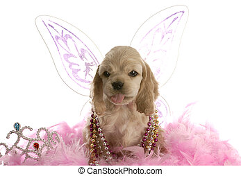 american cocker spaniel dressed up as an angel sticking tongue out at viewer on white background