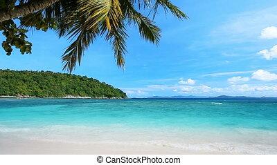 spokojny, plaża, tropikalny