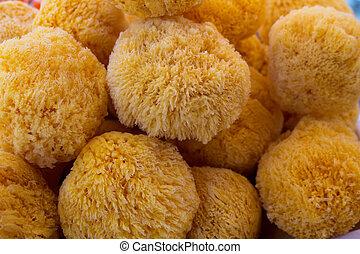 ??sponge, forma, detalle, mar, redondo