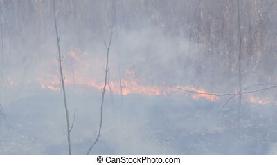 Spontaneous fire in the nature, burning grass, forest, trees...