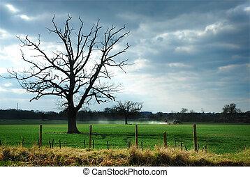 spooky, ciel, arbre, champ, tracteur, morose